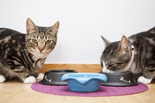 592a25245331 Φροντίδα του δέρματος και των αυτιών της γάτας - Κατοικίδια ...